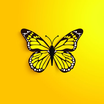 beautiful yellow butterfly on the background