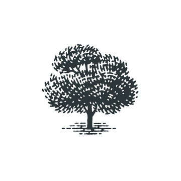 Engraved tree. Vector illustration of a fruit tree. Hand drawn engraving style illustrations.