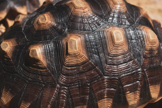 pattern of hard tortoiseshell, closeup image of turtle animal