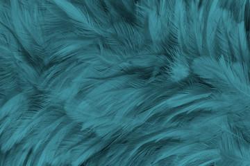 Beautiful close up dark black,green blue azure feather pattern texture background