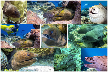 Moray Eel, coral - set - collage