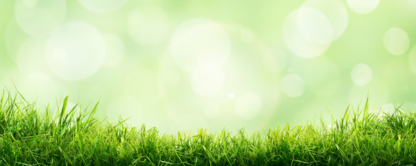 Photo sur Aluminium Jardin A fresh spring sunny garden background of green grass and blurred foliage bokeh.