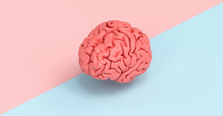 Human brain against a tow side ground, concept image for feminism and woman rights