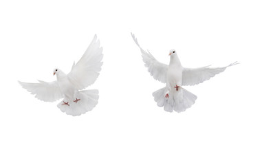 two free flying white dove isolated on a white Fotomurales