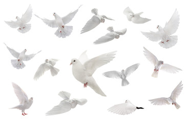 collage free flying white dove isolated on a white Fotomurales