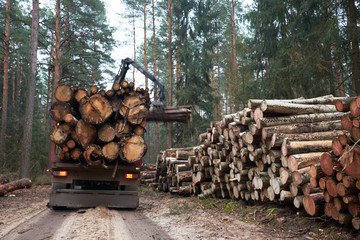 Logging truck loading logs in forest