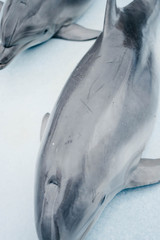 dolphins picture