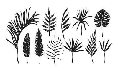 Set of palm leaves silhouettes isolated on white background. Illustration for invitation, banner, greeting card design
