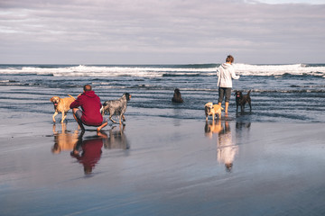 Young couple taking pictures and playing with their five dogs on the beach in springtime in Asturias, Spain. One of the dogs is shitting in the sea