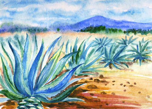 Mexican landscape with agave and agave plantation, watercolor illustration.