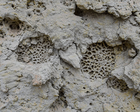Fossilized corals on a sandstone cliff face in the Nazca desert. Ica, Peru