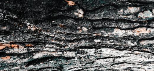 Photo sur Aluminium Texture de bois de chauffage Burnt wood texture close-up, Wide panorama format for banner or border, forest fire concept