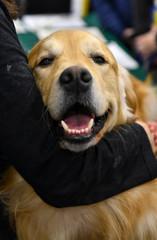 Dog photography, Labrador Retriever Dog isolated
