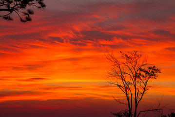 Poster de jardin Rouge colorful sky on sunrise with tree in background