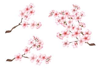 桜の枝3種