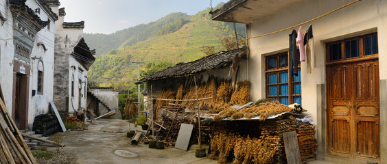 Drying soybeans in old village of Shangshe on Fengle lake Huangshan China with tea plants on hillside