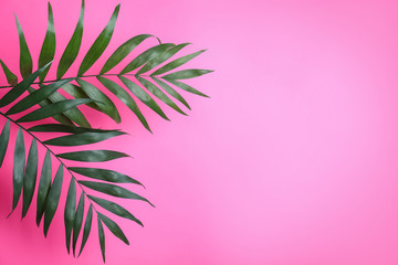 Beautiful lush tropical leaves on pink background. Space for text
