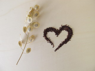 Edible brown-black seeds from field pennycress and stemps with winged pods