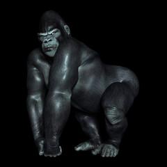 Gorilla vor schwarzem Hintergrund