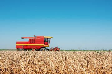 Combine harvesting in a field of golden wheat.