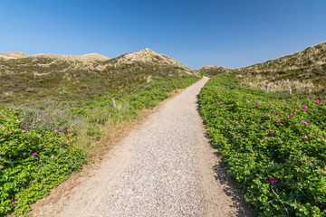 Footpath through the beautiful dunes on the island of Sylt in Northern Germany