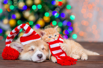 Sleepy pembroke welsh corgi puppy wearing funny santa hat lies with kitten  on festive Christmas background. Empty space for text