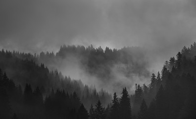 Poster Gray Misty Black and White Monochromatic Mountains with Forest shrouded in fog
