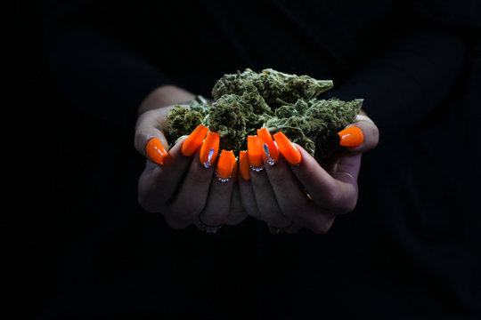 Weed buds held by woman's hands with orange acrylic nails with diamonds. Black background