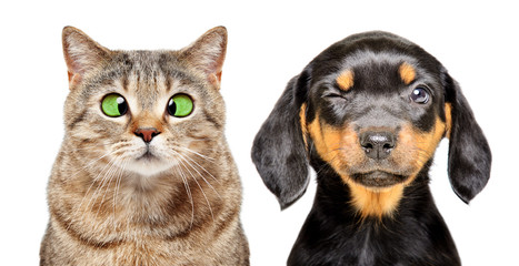 Portrait of cat and dog with eye diseases isolated on a white background