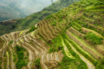 Foto auf AluDibond Reisfelder Famous rice terraces fields in Longsheng, China