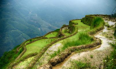 Türaufkleber Reisfelder Majestic rice terraces fields in Longsheng, China