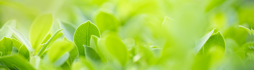 Foto op Aluminium Natuur Close up of nature view green leaf on blurred greenery background under sunlight with bokeh and copy space using as background natural plants landscape, ecology cover concept.