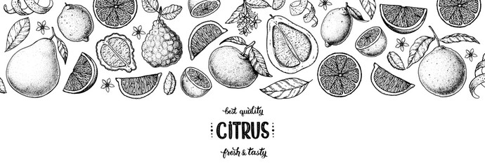 Citrus hand drawn vector illustration. Lemon sketch for design. Black and white style. Citrus lemon, pomelo, orange, bergamot pattern illustration. Citrus packaging design.