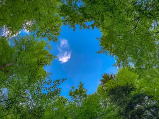 Blick durch das Blätterdach eines Waldes