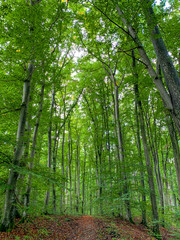 Waldbaden in einem Buchenwald