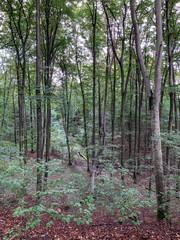 Herbstliche Kulisse in einem Mischwald