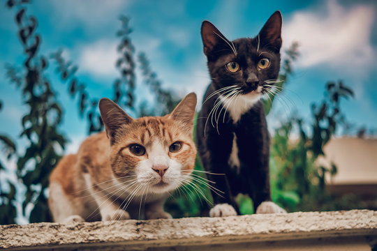 two Cats on the street staring at the camera