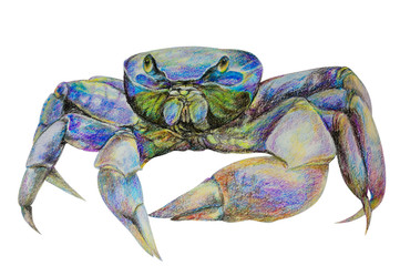 live crab, painted in watercolor and colored with crayons. Isolated