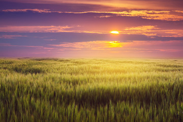 In de dag Weide, Moeras Wheat field and picturesque sky at sunset. Rural landscape_