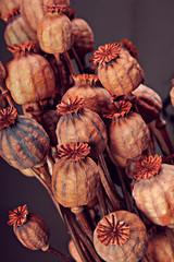 Opium capsules