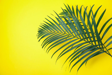 In de dag Hoogte schaal Beautiful lush tropical leaves on yellow background. Space for text