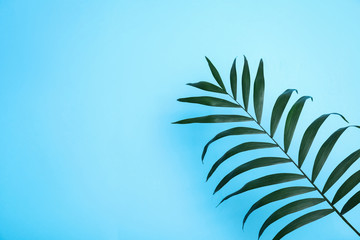 In de dag Hoogte schaal Beautiful lush tropical leaf on light blue background. Space for text