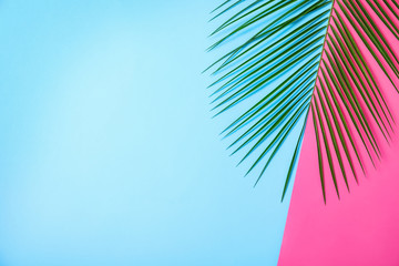 In de dag Hoogte schaal Beautiful lush tropical leaf on color background. Space for text