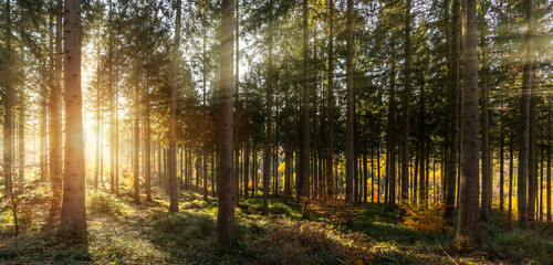 Silent Forest in spring with beautiful bright sun rays