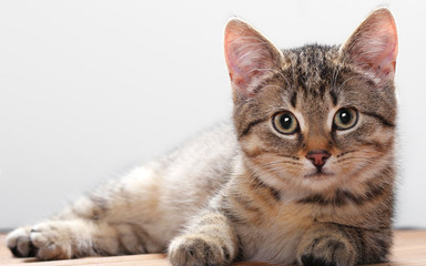 Best Beautiful photos of domestic cats
