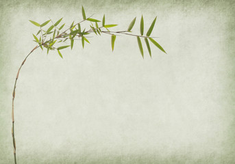 Wall Mural - bamboo on old paper background