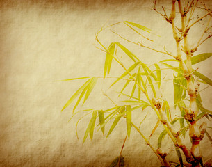 Fototapete - bamboo on old paper background