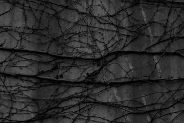 Fototapeta コンクリート壁 アブストラクト22