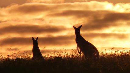 Silhouette Kangaroos On Field Against Sunset Sky