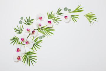 orchid flowers and green leaves on white background